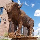 Hudson buffalo pics